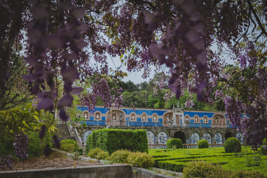 wisteria and azulejos in the background