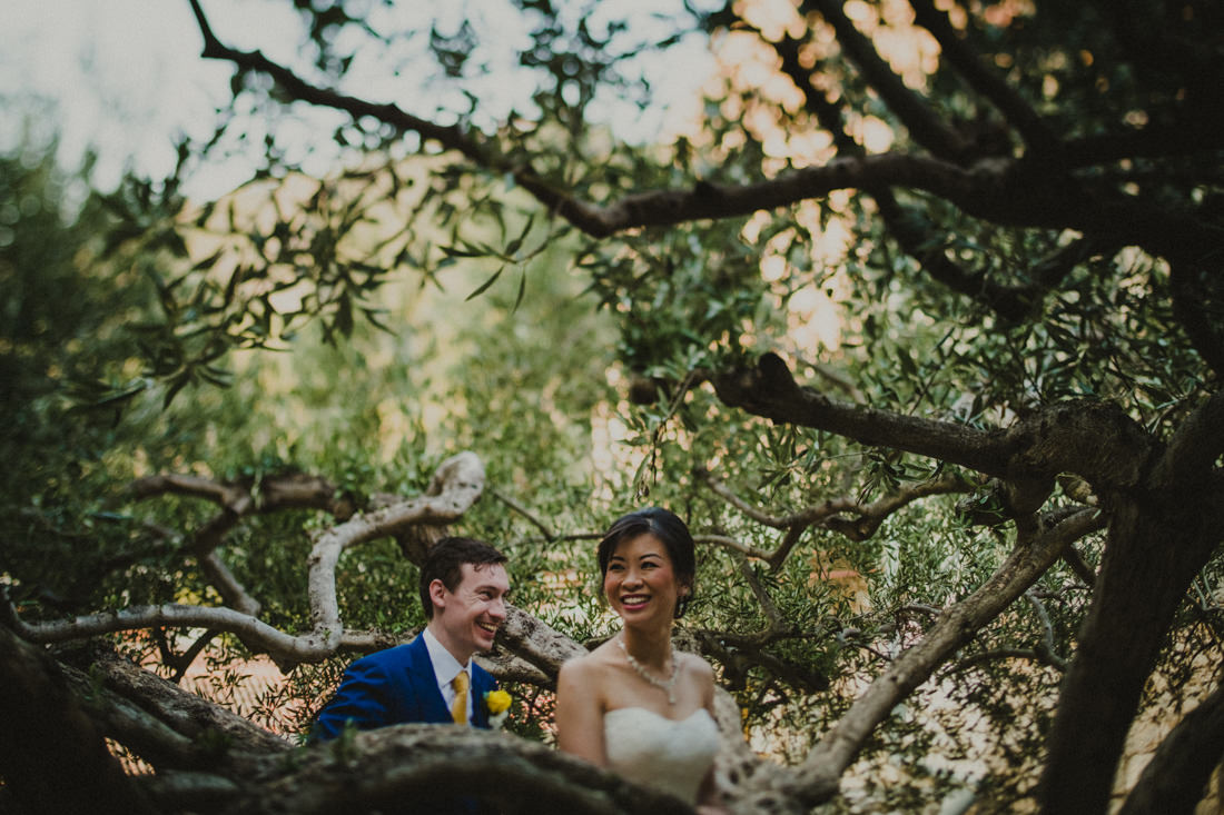 newlyweds among olive trees